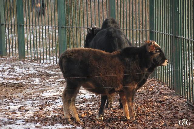 Tierpark Friedrichsfelde 29.01.201777
