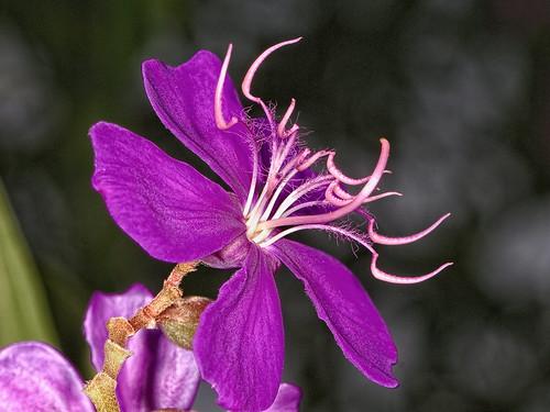 how to give a purple nurple