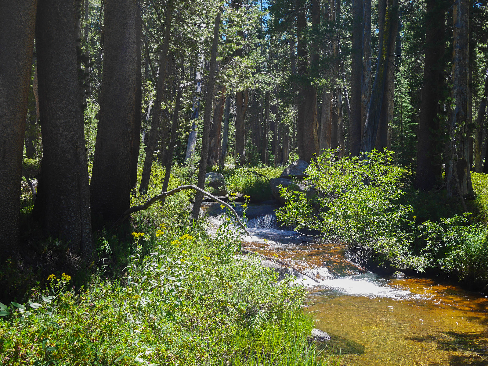 Long Canyon creek