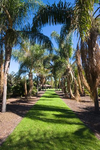 El jard n bot nico viera y clavijo jard n canario en la - Jardin botanico las palmas ...