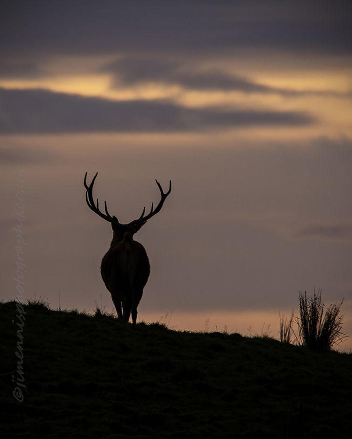 the stag at eve