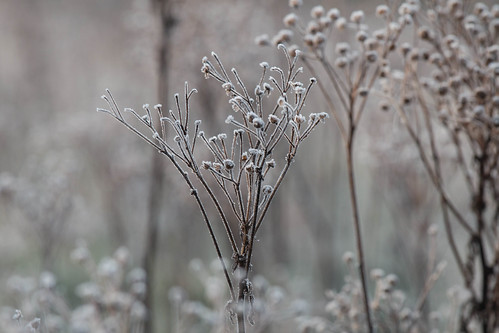Frosted | by jillyspoon