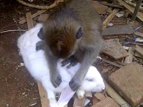 Cerita Hewan Lucu Fabel Monyet Dan Kelinci Cerita Hewan Flickr