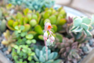 Succulents-3 | by Marianne Donahoe
