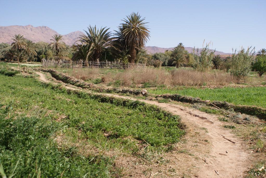 Plantations dans la vallée de Tinghir au Maroc.