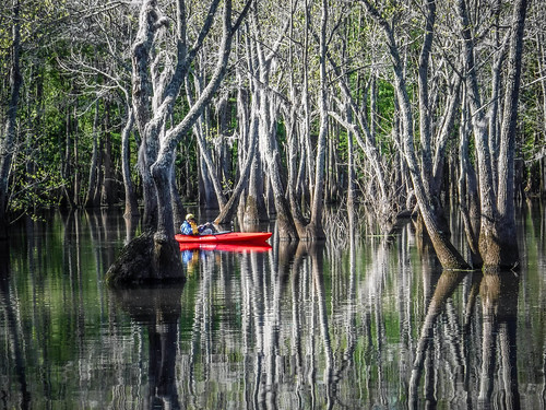 Sparkleberry Swamp-16