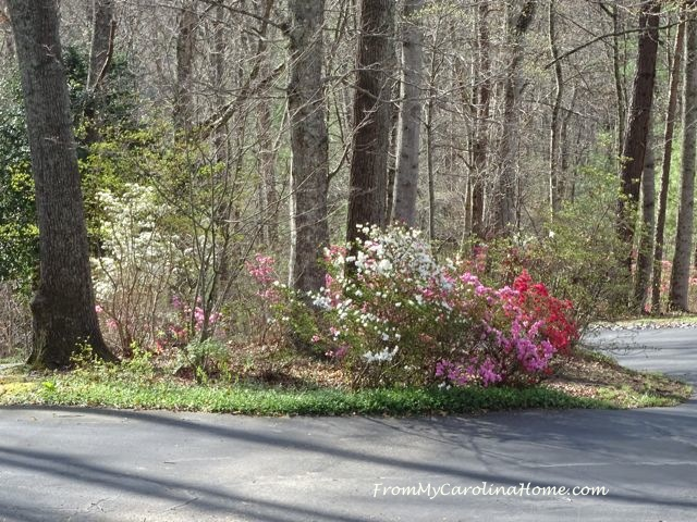 Early April in the Garden at From My Carolina Home