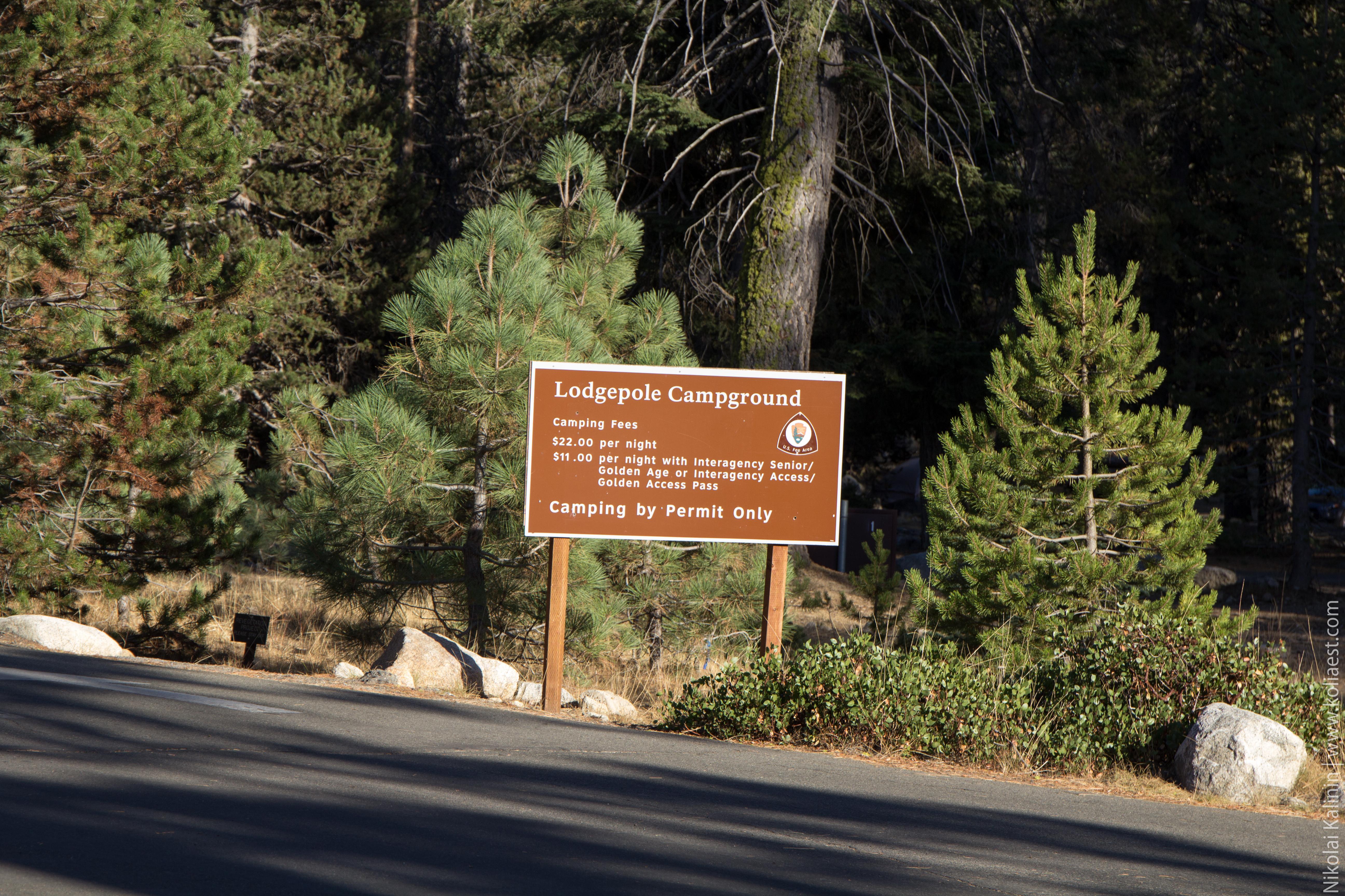 Sequoia-50