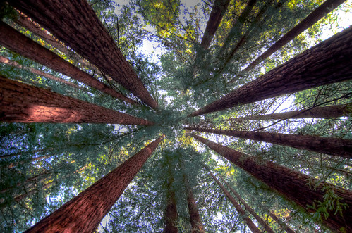 Humboldt Redwood Forest Single_tonemapped | by Scrubhiker (USCdyer)