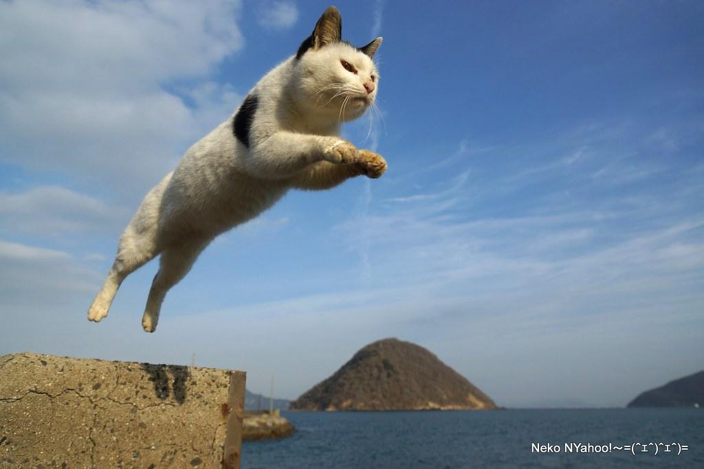 ... 島猫 大ジャンプ | by GINPA 銀波
