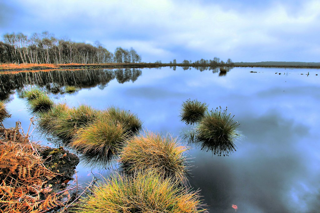 Hatfield moor nature reserve