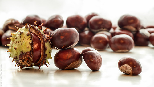 Horse Chestnut seeds // 12 10 13 | by Manadh