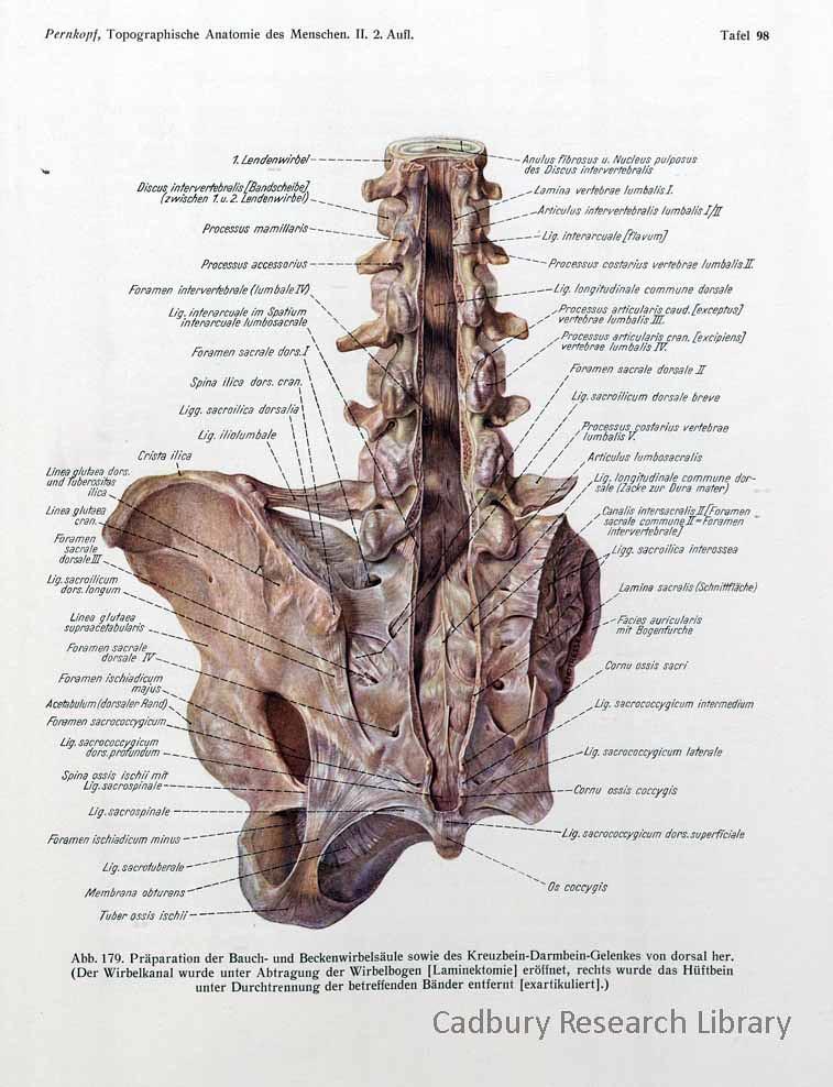 Pernkopf, Topographische Anatomie, 1941, Cadbury Research … | Flickr