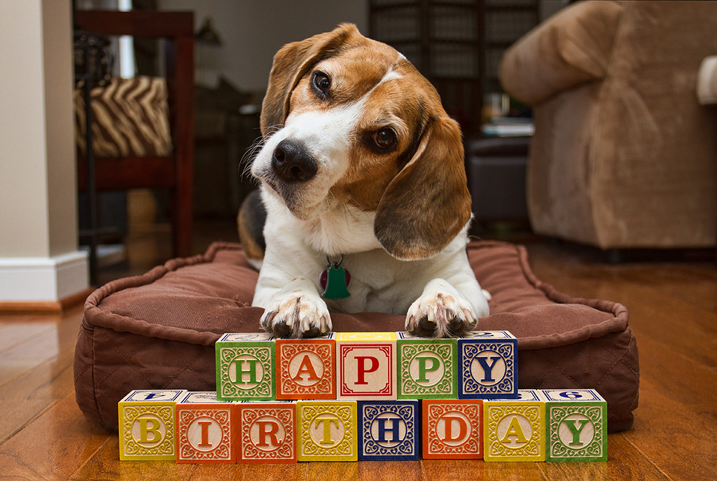 birthday beagle  used this for my mom's birthday card   rich, Birthday card