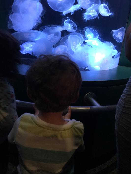060516_aquarium07