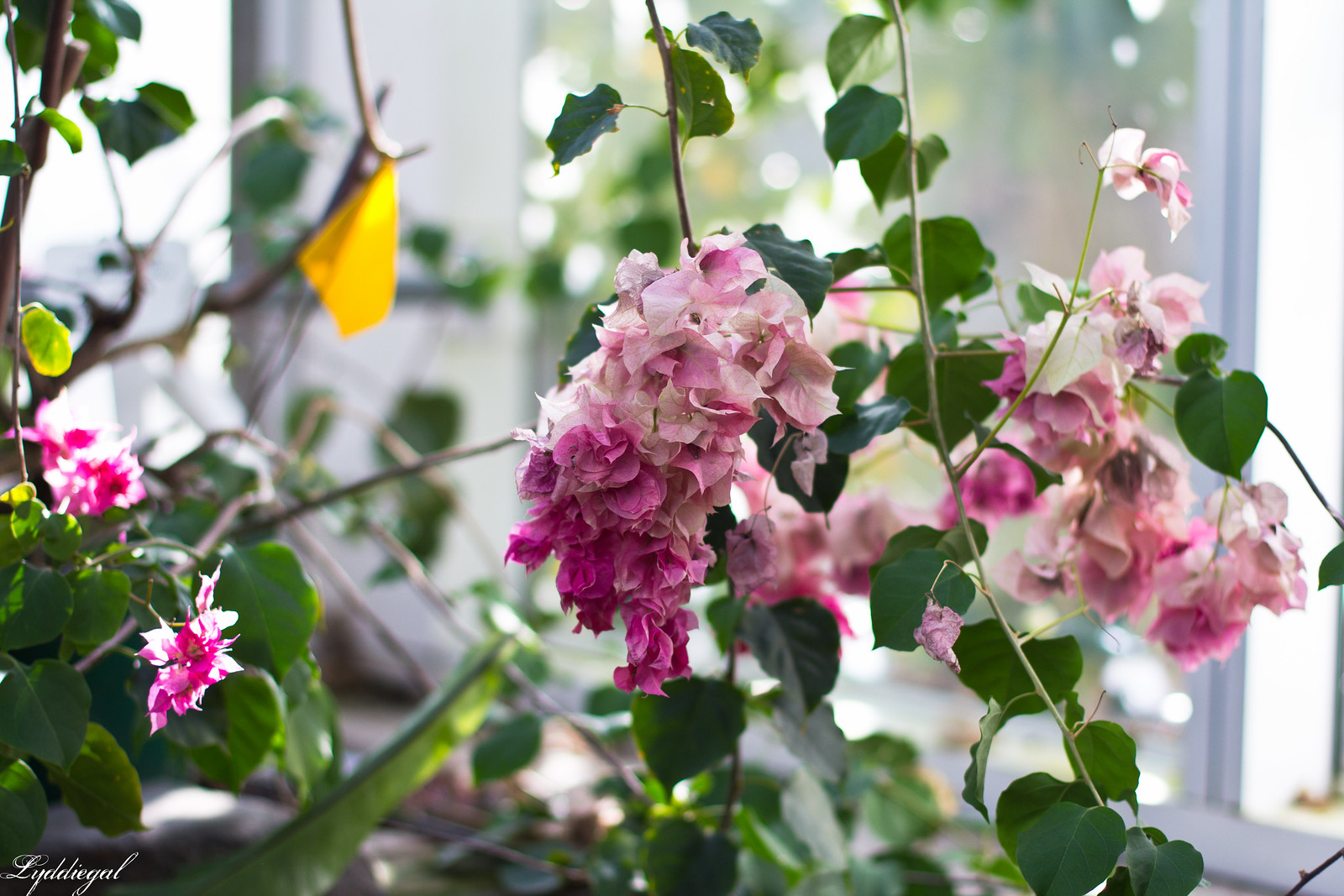 yale botanical garden.jpg