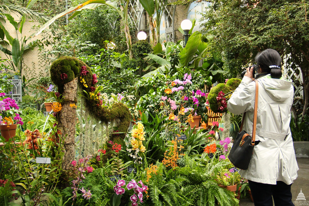 ... Orchid Symphony Exhibit At The U.S. Botanic Garden | By USCapitol