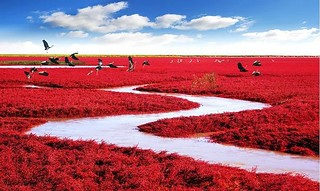 Red Beach Panjin, China | by goglee
