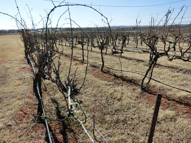 Whispering Vines Vineyards