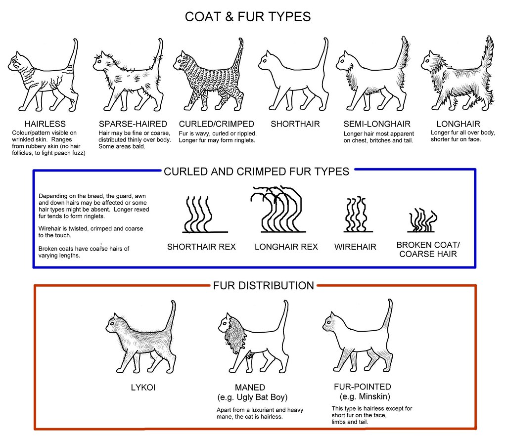 Color of cats fur -  Coat Fur Types By Messy_beast