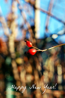 Rose Hip | by Rosa's Yummy Yums