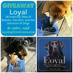 Loyal giveaway