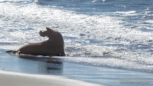 Seal Beach Swim Club