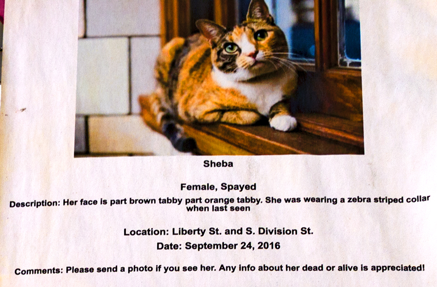 Missing woman and cat--Ann Arbor (detail 2)
