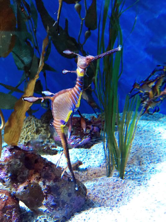 060516_aquarium39