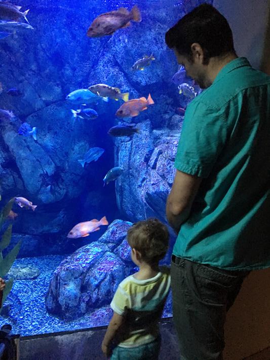 060516_aquarium06