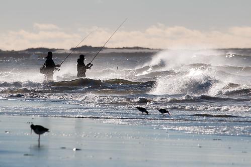 Surf fishing surf fishing nickerson beach long island for Long island surf fishing report