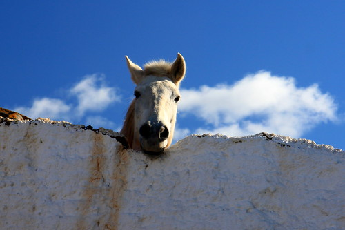 Horse looking over a wall - head in the clouds! | by muffinn
