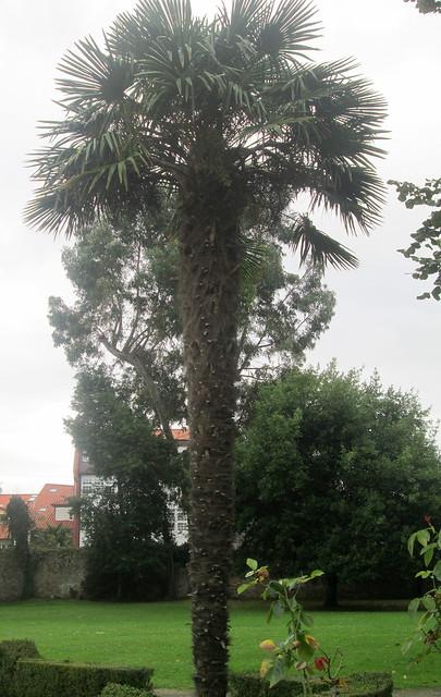 Tree, Ferrera Park, Avilés