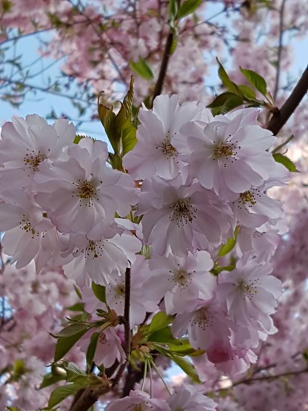 Frühling riechen