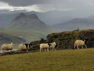 095 Dyrhólaey boven bij de vuurtoren schapen land