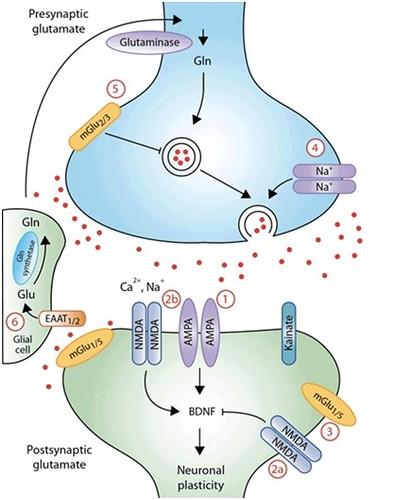 mecanismo da cetamina-1