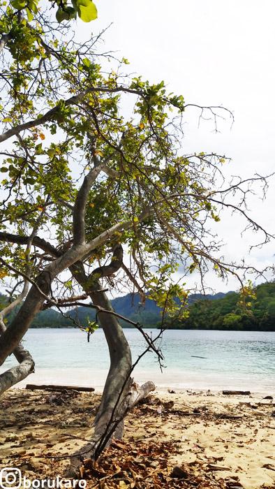 Pohon-pohon di Pulau Kelapa