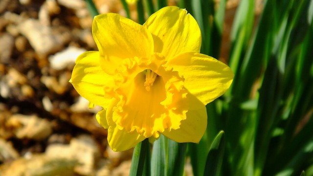 spring has sprung 03