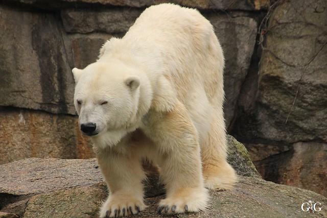 Besuch Zoo Berlin 26.02.201751