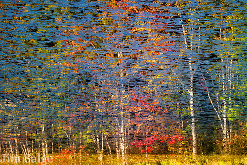 Swamp Maple Reflection Abstract | by Jim Salge