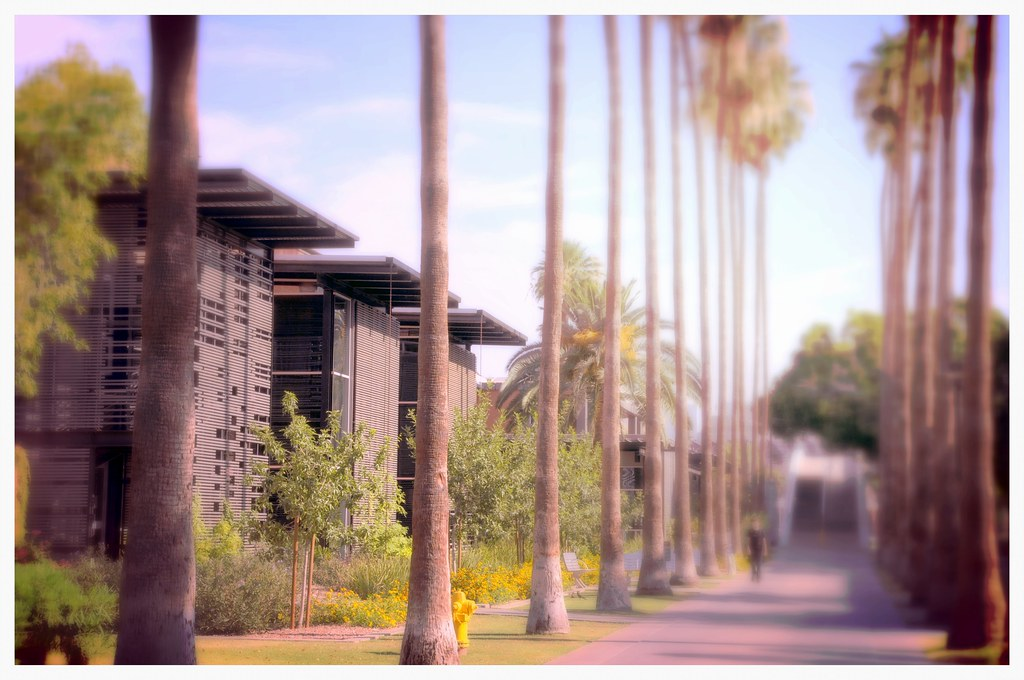 ... Palm Walk Arizona State University ASU Tempe Campus Landscape  Architecture DSC_3422x | By David Kozlowski