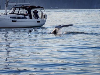 Humpback Whale and Boat | by itsmarykate
