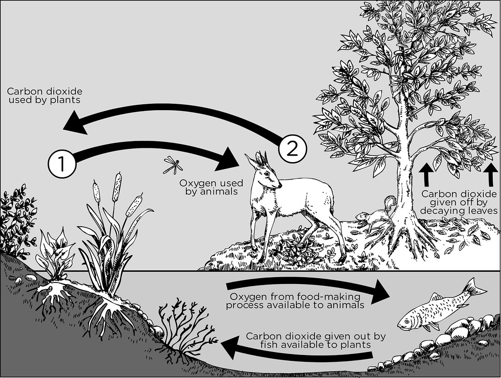 Carbon cycle Illustration used in Gr 46 Natural Sciences – Carbon Cycle Diagram Worksheet