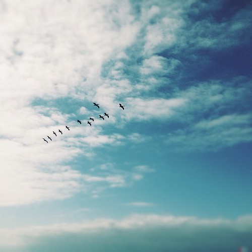 Birds flying high, you know how I feel; sun in the sky, yo ... - photo#13