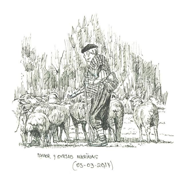 Pastor y merinas