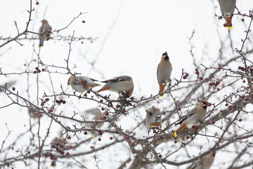2017-02-15 Barrie Birding