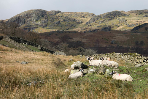 Kentmere sheep rocks | by julesberry2001