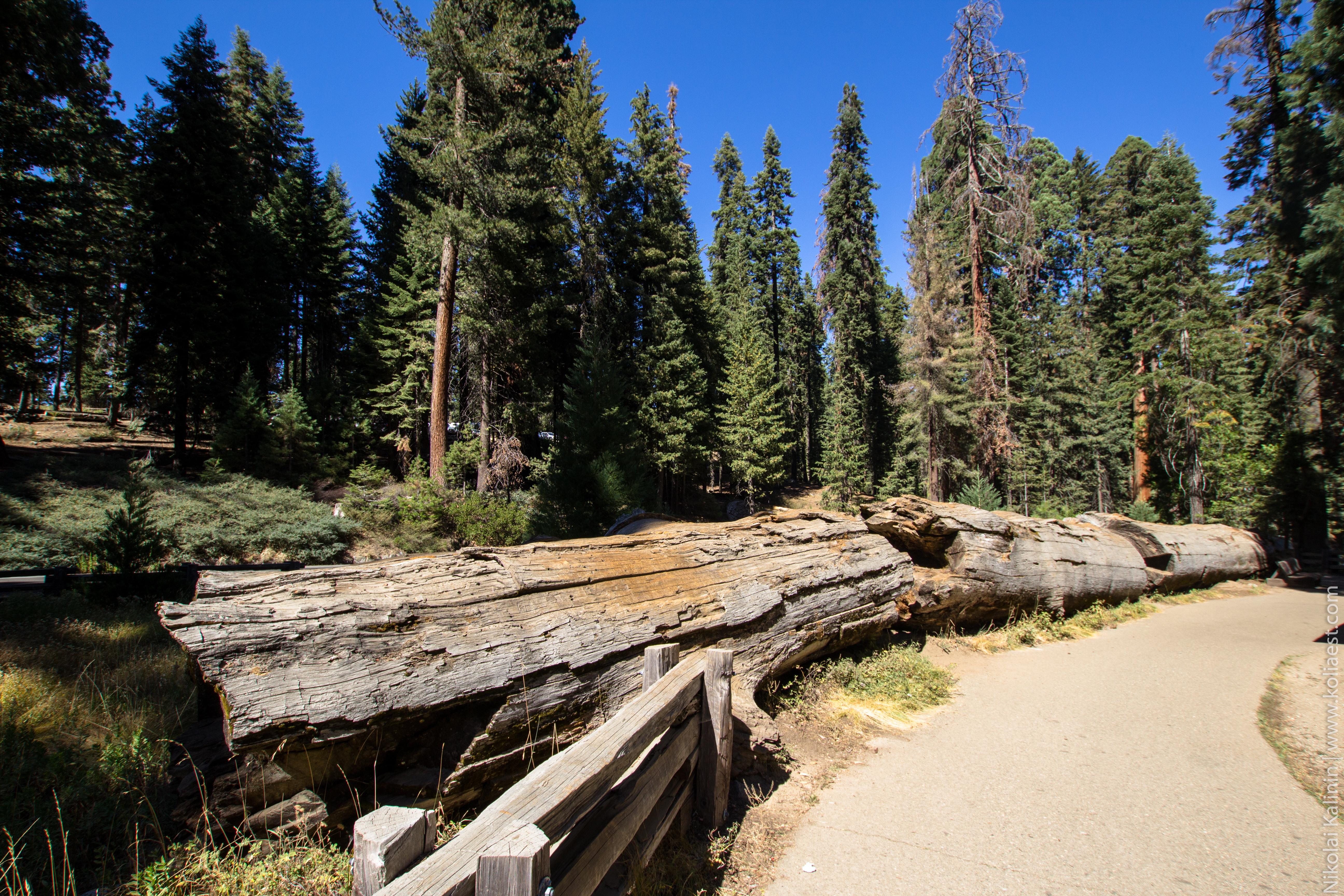 Sequoia-74