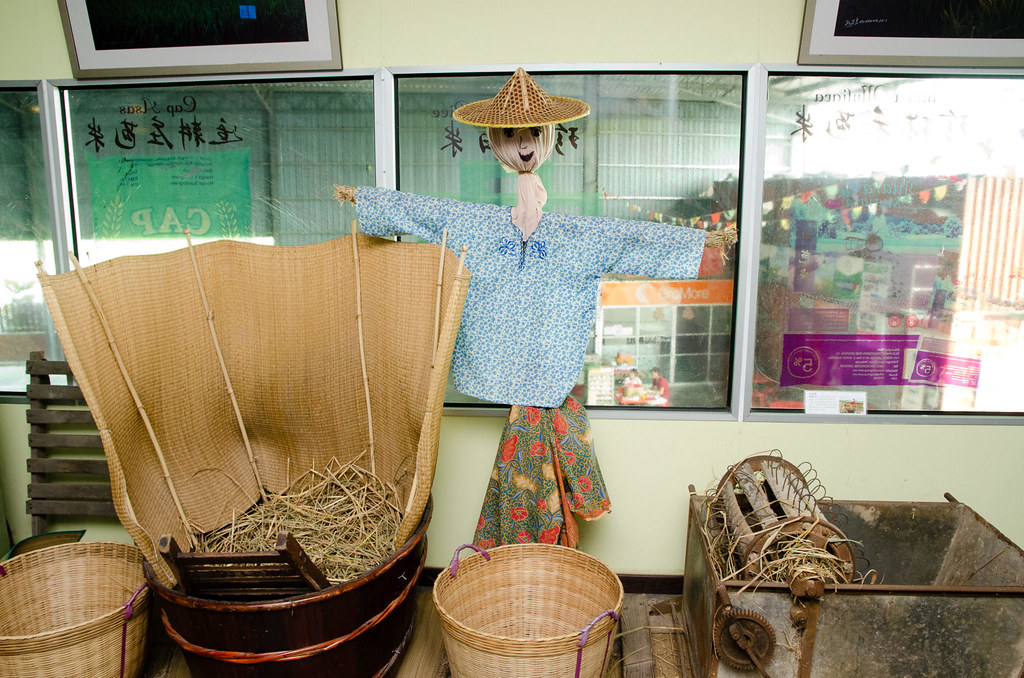Scarecrow to scare the birds away from paddy field