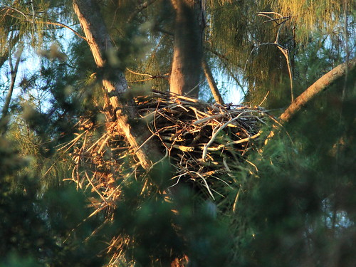 eagle nest singles over 50 New mexico is known as the land of enchantment and ourtimecom is here to bring their 50+ singles jachin eagle nest, nm where to meet a mate if you're over.